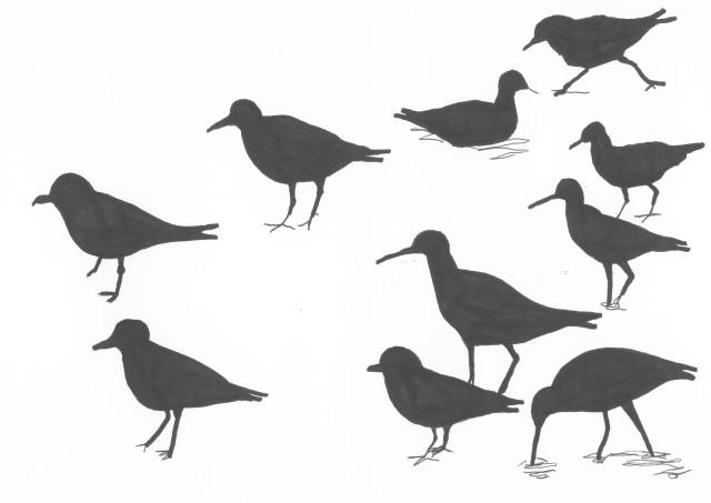 birdssix